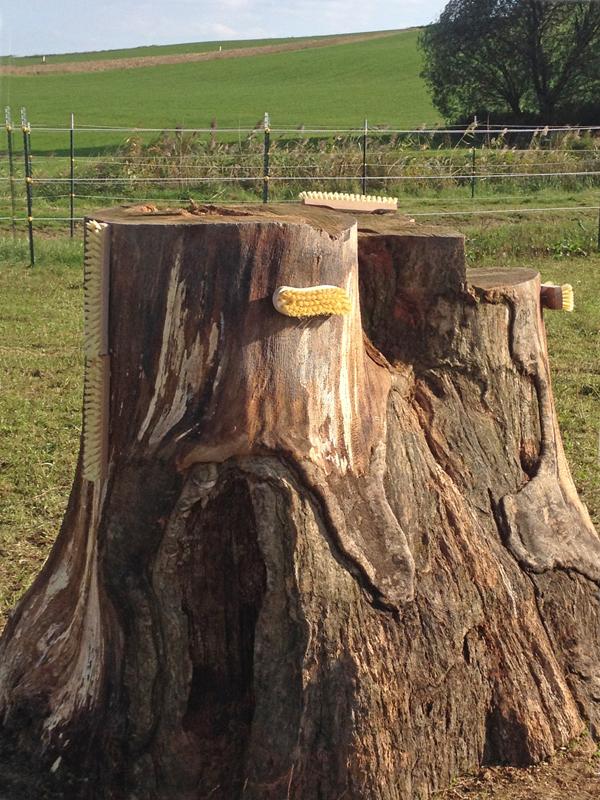 Bürsten in unterschiedlicher Höhe, an einem Baumstumpf befestigt, animieren vor allem im Fellwechsel zum Schubbern. Eine gute Ergänzung zur sozialen Fellpflege.Foto: privat