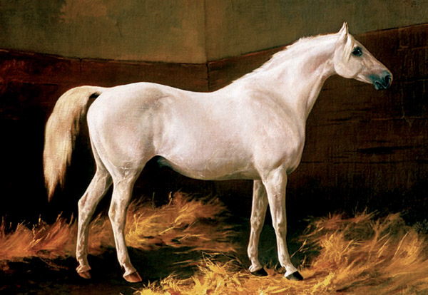Shagya-Arabian stallion Shagya X, born 1855 at Mezöhegyes (Shagya IV, 1841, Bábolna / 302 Samhan, 1845 Mezöhegyes). He was an exceptional sire, who sired several chief sires for Bábolna, Mezöhegyes and Radautz. The founder of the Shgaya strain is the stallion Shagya, born 1830, bred by the Bani Saher Bedouins, imported by Baron von Herbert on the occasion of this purchasing commission in 1836 to Syria, Aleppo and Damascus. This expedition was an important success. Five mares and nine stallion were delivered healthy at Bábolna, among them Shagya, who was – according to the studbook – a dappled grey of 160 cm. He was not only harmonious but also very strongly built, well muscled and nobel.