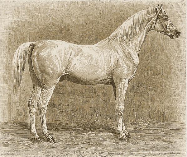 Original-Araber-Hengst Tajar, geboren 1801 (nicht zu verwechseln mit den Hengsten aus Weil mit gleichem Namen). Er war das Idealbild für die Pferdezüchter zu Anfang des 19. Jahrhunderts. Der Hengst wurde von Baron von Fechtig 1811 in Kairo bei einer Versteigerung gekauft und gehörte zuvor einem der von Mohamed-Ali ermordeten Mamelucken-Scheichs. Es war wahrscheinlich Latif-Bey, der den Hengst aus dem durch Napoleon I. zerstörten Gestüt des Murad-Bey (in Gizeh, nahe Kairo) gekauft hat. Als er mit dem Schiff in Triest landete, wurde er vom Grafen Hunyady von Kétely für sein Gestüt Ürmény in Ungarn erstanden. Bis 1826 hinterließ er dort 206 Fohlen von bester Qualität.