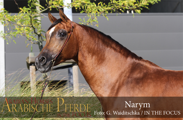Narym - IMG_7082 (c) Waiditschka-600px