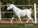 Memduha (Naheed / Messaouda) *1995