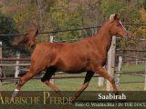 Saabirah (Pamir I / Sarina) *1999
