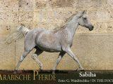 Sabiha (NK Bolbol / Sarina) *2004