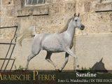 Sarafine (Insh Allah / Sarina) *2008