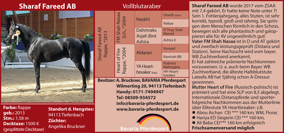 Bavaria Pferdesport - Angelika Bruckner