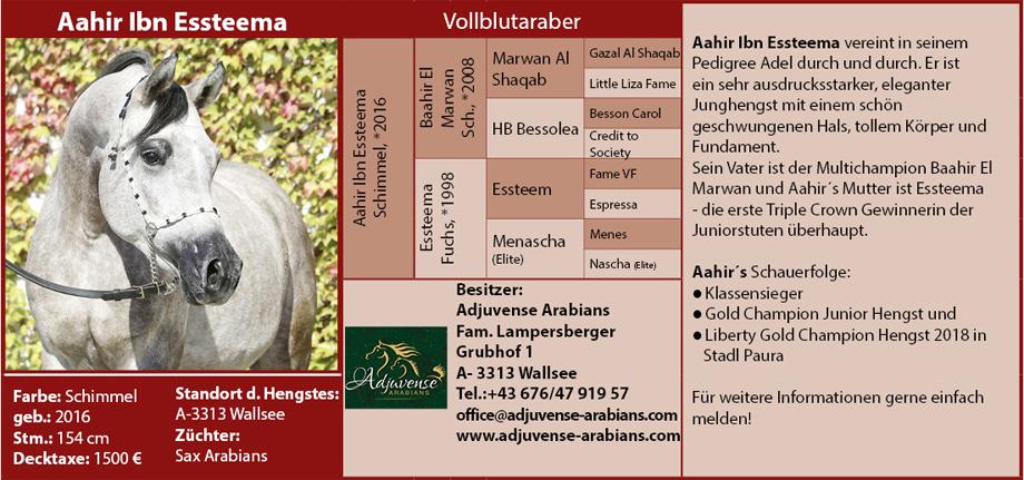 Adjuvense Arabians - Aahir Ibn Essteema