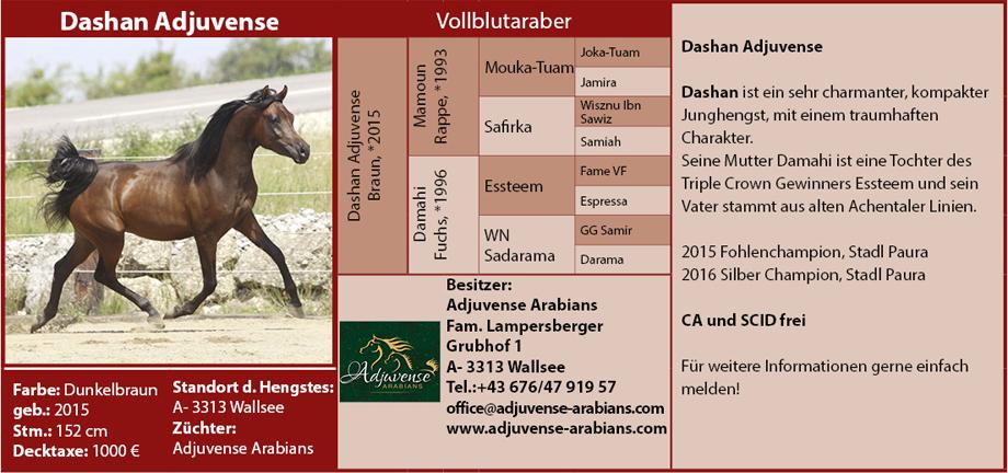 Adjuvense Arabians - Dashan